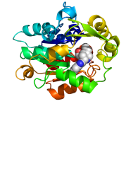 Protein-Drug Interaction